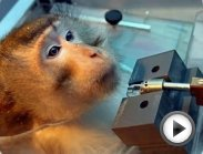 Animal Testing & Vivisection