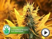 How to Grow Weed-Basic Needs-Marijuana